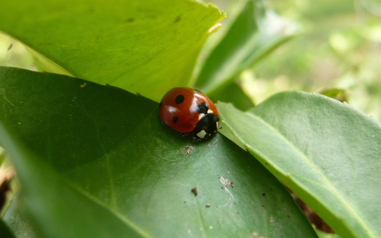 La biodiversité est cruciale à notre survie