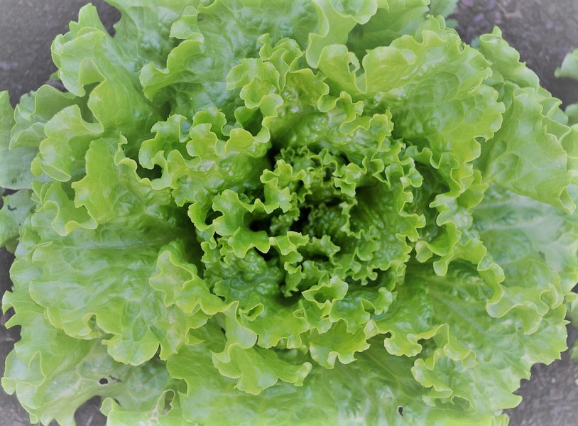 La salade présentée par Jean-Michel Cohen