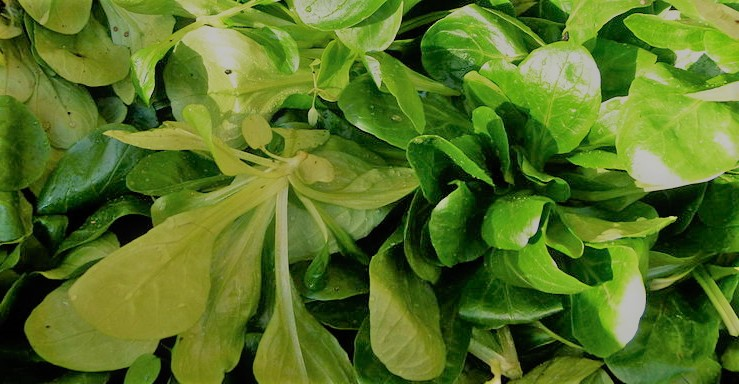 La mâche, un exemple de salade